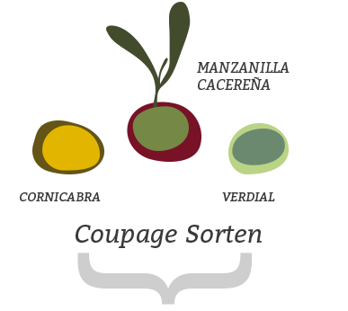 coupage sorten jacoliva aove (manzanilla cacereña + verdial + cornicabra)