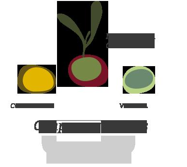 Coupage varieties jacoliva evoo (manzanilla cacerena + verdial + cornicabra)